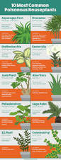 houseplants houseplants safe for cats and dogs fix com