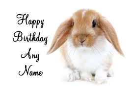 rabbit birthday bunny rabbit birthday card