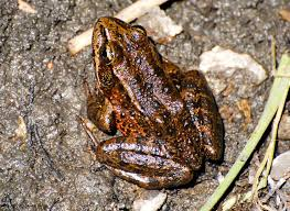 How To Get Rid Of Cane Toads In Backyard Change Seemed Like A Distant Impersonal Problem