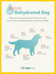 weather dogs tips for keeping your canine cool pup dog and