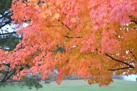 autumn leaves roadkill crossing