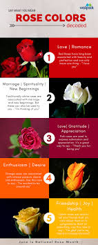 what different colors mean what is the meaning of that rose color