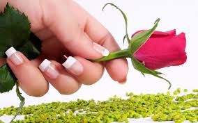 Rose Flower Images Wallpaper Rose Flower Hand Manicures Stones Hd Picture Image