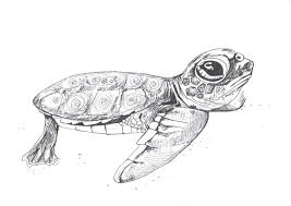 ink pen drawing of a baby sea turtle signed by the artist dr