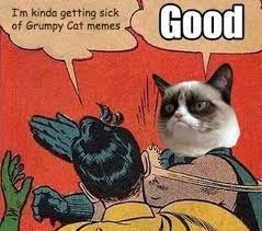 Grumy Cat Memes - are you sick of grumpy cat memes