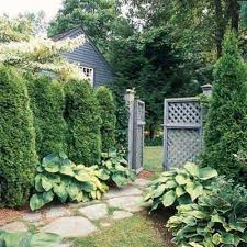 Privacy Screen Ideas For Backyard Natural Privacy Screen Ideas Favething Com