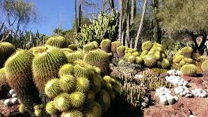 Botanical Gardens Huntington File Barrel Cacti At Huntington Library Collections And