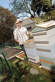 Raising Bees In Backyard by Become An Urban Beekeeper Seattle Magazine