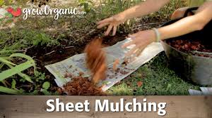 sheet mulching to control or get rid of your lawn youtube