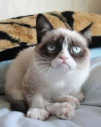 Meme Generator Grumpy Cat - grumpy cat blank template keywords and pictures