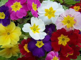 winter flower ideas for your garden diy network blog made