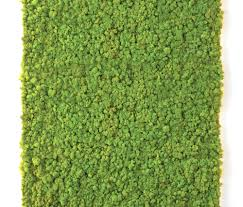 Moss Moss Wall Living Green Walls From Verde Profilo Architonic
