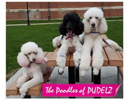 pudelz all things poodley poodle gifts poodle ornaments