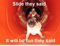 Funny Dogs Memes - funny dogs pictures