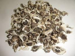 pmk 1 moringa seeds world seed supply