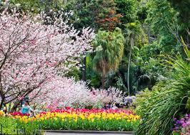Botanic Garden Sydney Guided Walks At The Royal Botanic Garden Sydney Living Museums