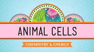 eukaryopolis the city of animal cells biology 4 cell biology