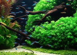 Aquascape Design Layout Aquascape Design