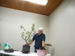 louisiana native plant society louisiana bonsai society