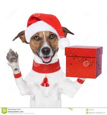 surprise christmas dog with a present box stock image image