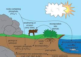 crash course nitrogen and phosphorus cycle marybelle u0027s marine