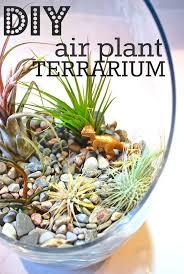 best 25 terrarium plants ideas on pinterest terranium diy