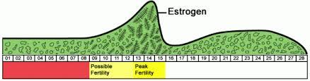 ferning pattern in spanish reusable saliva based ovulation monitors microscopes purchase online