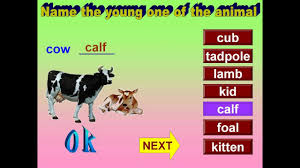 young ones of animals for children youtube