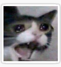 Sad Cat Meme - sad cat meme stickers redbubble
