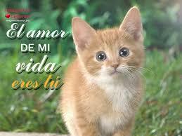 imagenes de gatitos sin frases 8 imágenes de gatitos tiernos con lindas frases de amor