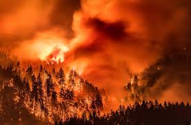 Wild Fires In Oregon State by Woman Witnessed Teen Tossing Firecrackers Into Gorge U201cthere Was A