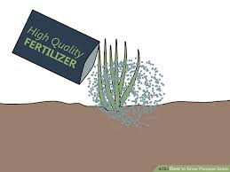 how to grow pas grass 15 steps with pictures wikihow