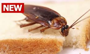 How To Get Rid Of Bugs In Kitchen Cabinets How To Get Rid Of Roaches Fast How To Get Rid Of Cockroaches How