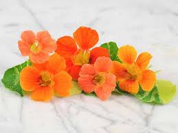 nasturtium flowers item listing baker creek heirloom seeds