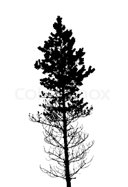 images of cedar trees silhouette vector sc