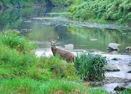 8 types of deer crossings you should hunt realtree