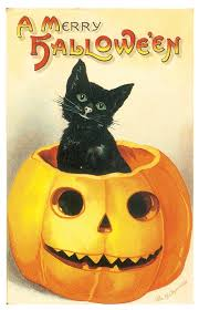 halloween background cat and pumpkin jack o lanterns u2014 maniac pumpkin carvers