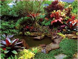 decorative plants outdoor with regard to your own home