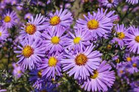 8 fall blooming flowers friendly to bees birds and butterflies
