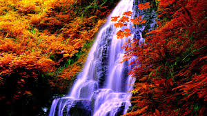 waterfall forest waterfalls autumn nature falls wallpaper with