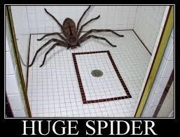 Huge Spider Memes Image Memes - the 25 best australian huntsman spider ideas on pinterest scary