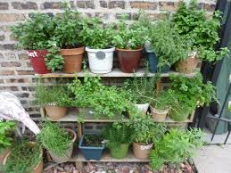 herb wall articles with indoor wall herb garden diy tag herb wall garden photo