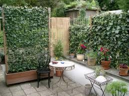 pflanzen f r balkon sichtschutz terrasse pflanzen sichtschutz fr balkon und hof tipps