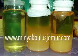 Minyak Bulus Asli Papua ciri ciri minyak bulus asli dan cara menguji ke asliannya jual
