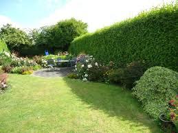 Garden Hedges Types Caring Your Outdoor Garden Hedges Wearefound Home Design