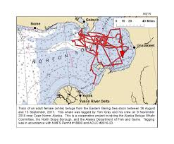 Southeast Alaska Map Satellite Tagging Maps 2016 2017 The North Slope Borough