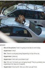 Gang Bang Memes - steve routledge on twitter nothing like a cat gangbang on your car