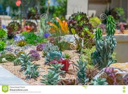 desert native plants succulent water wise desert garden stock photo image 71397545