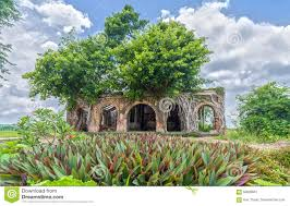 drawing from old houses in beautiful banyan tree stock photo