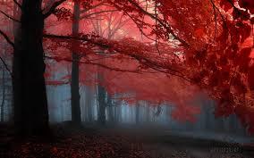 nature forrest landscape desktop images red tree